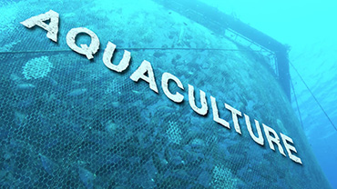 WHAT IS AQUACULTURE? (Bonus 1)
