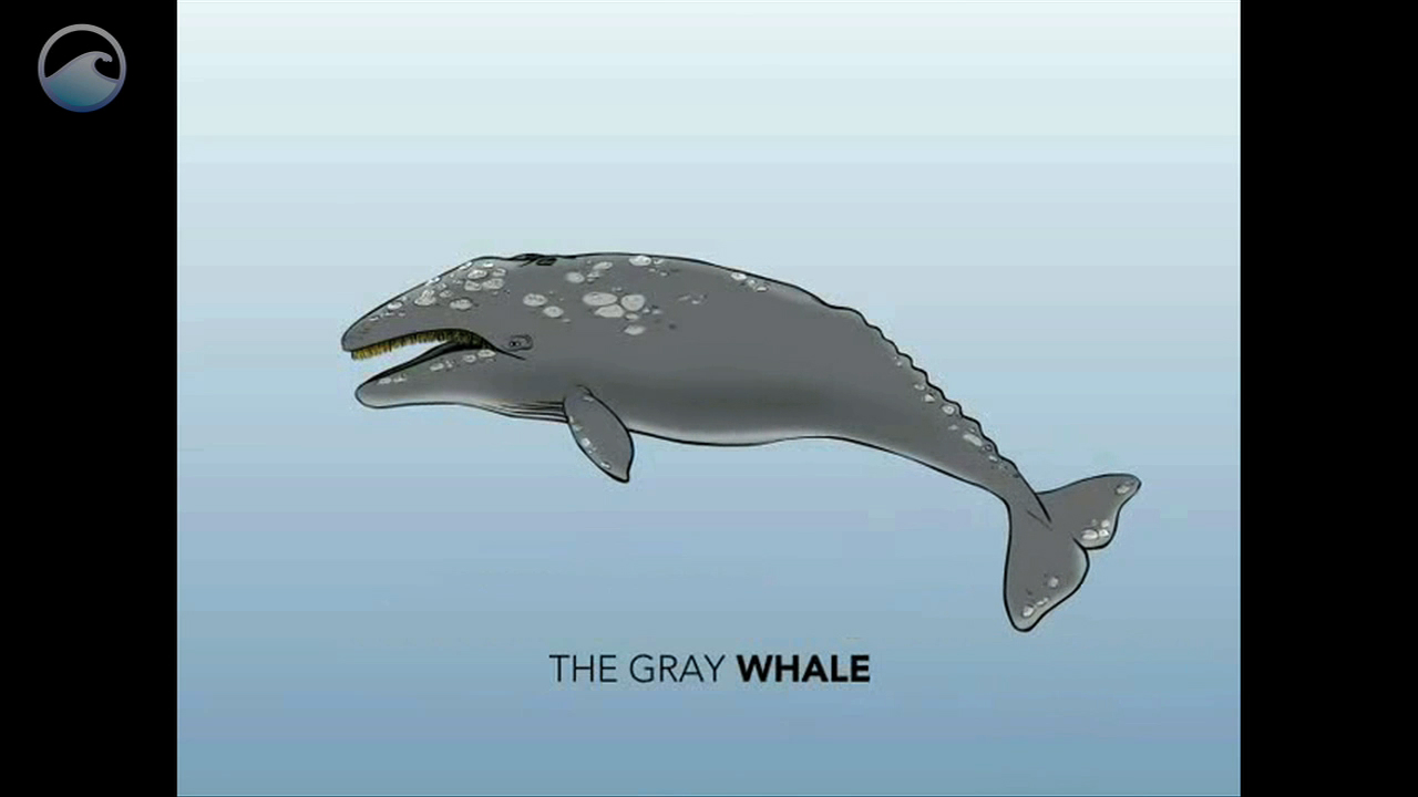 Whale Anatomy | Ocean Today